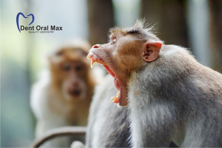 Primatele