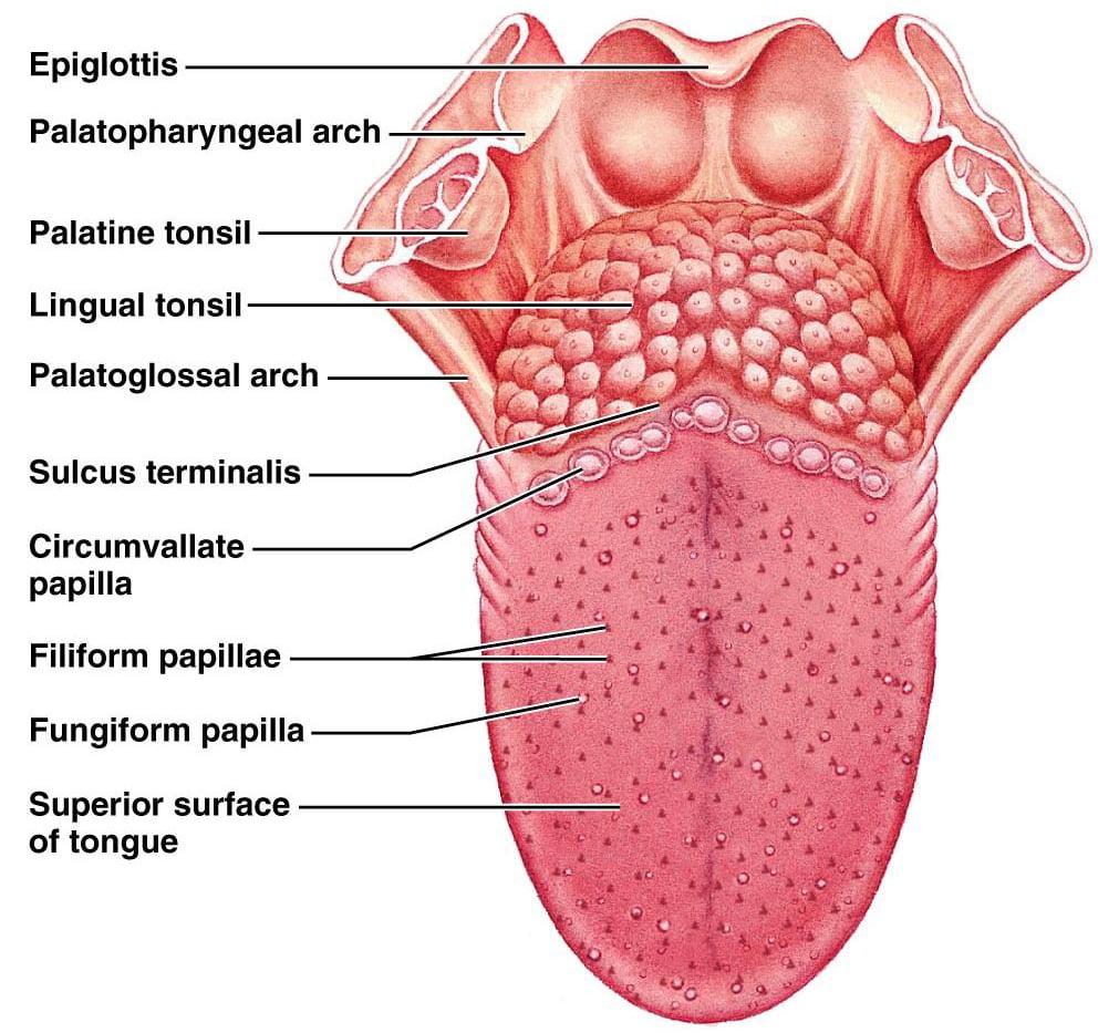 Cancerul cavitatii orale - limba